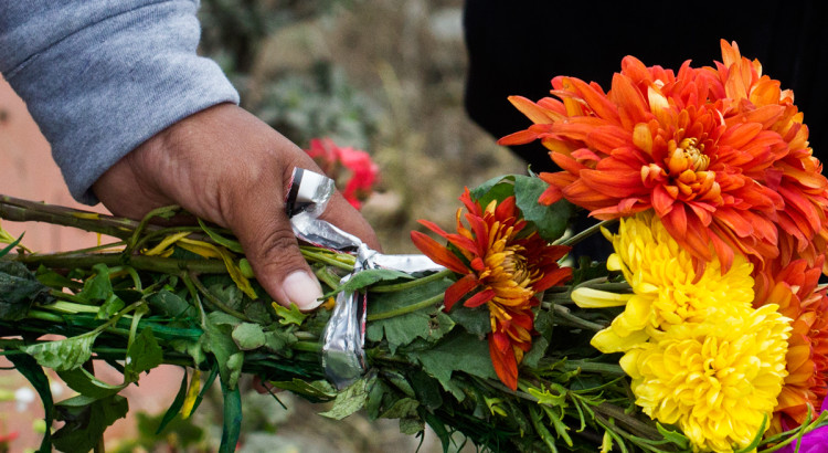 peru, cemetery, flowers, day of the dead, day of the living